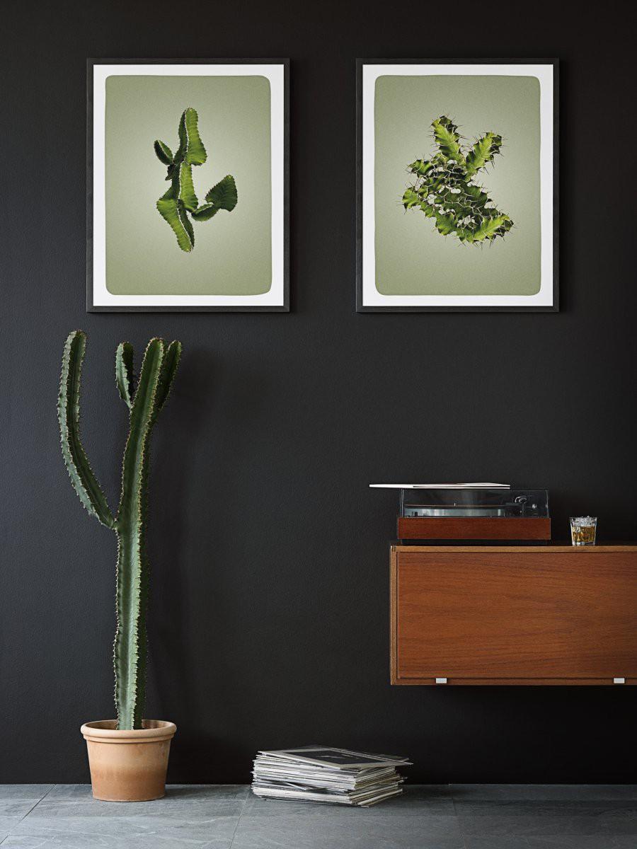 kaktus_0